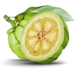 Strongest Available Garcinia Cambogia