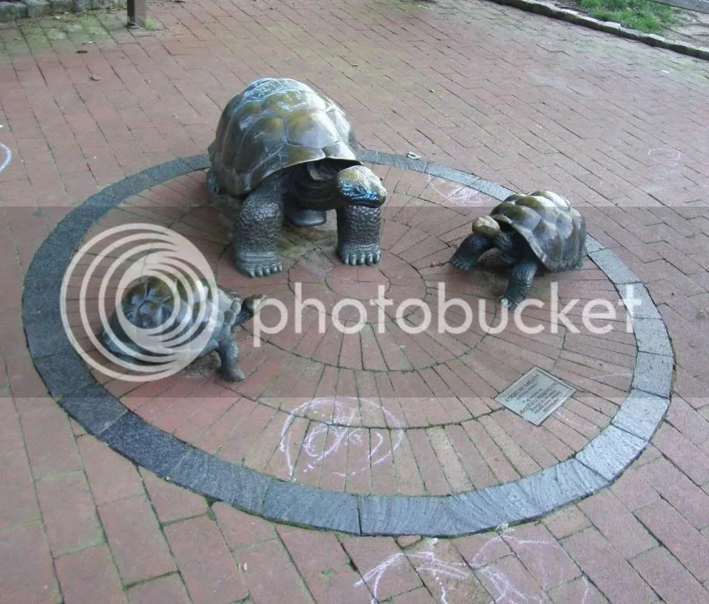 Filter Square Turtles