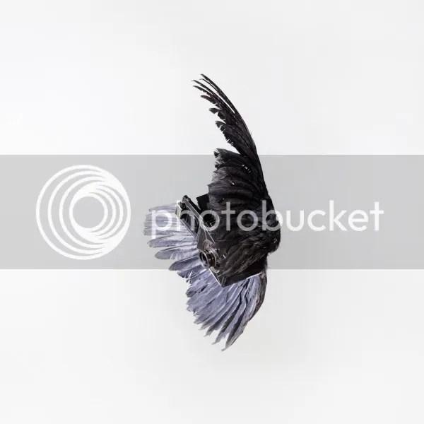 photo PaulOctavious-BirdsOfAperture3_zpse240dfb0.jpeg