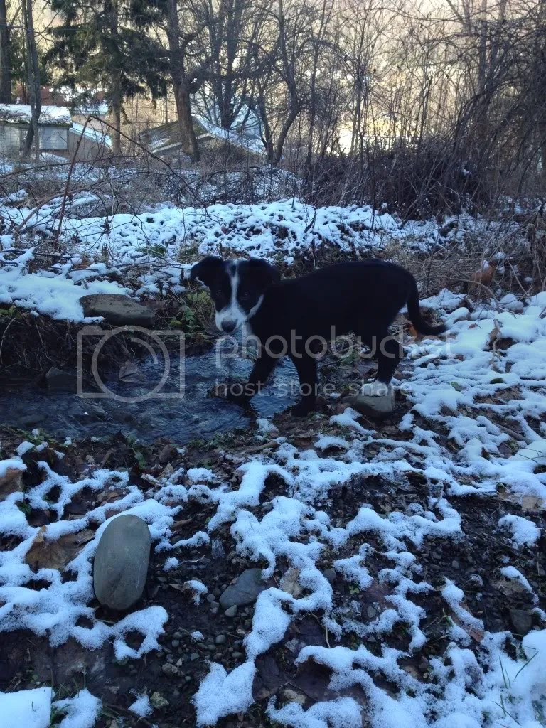 #TBT, border collie, snow