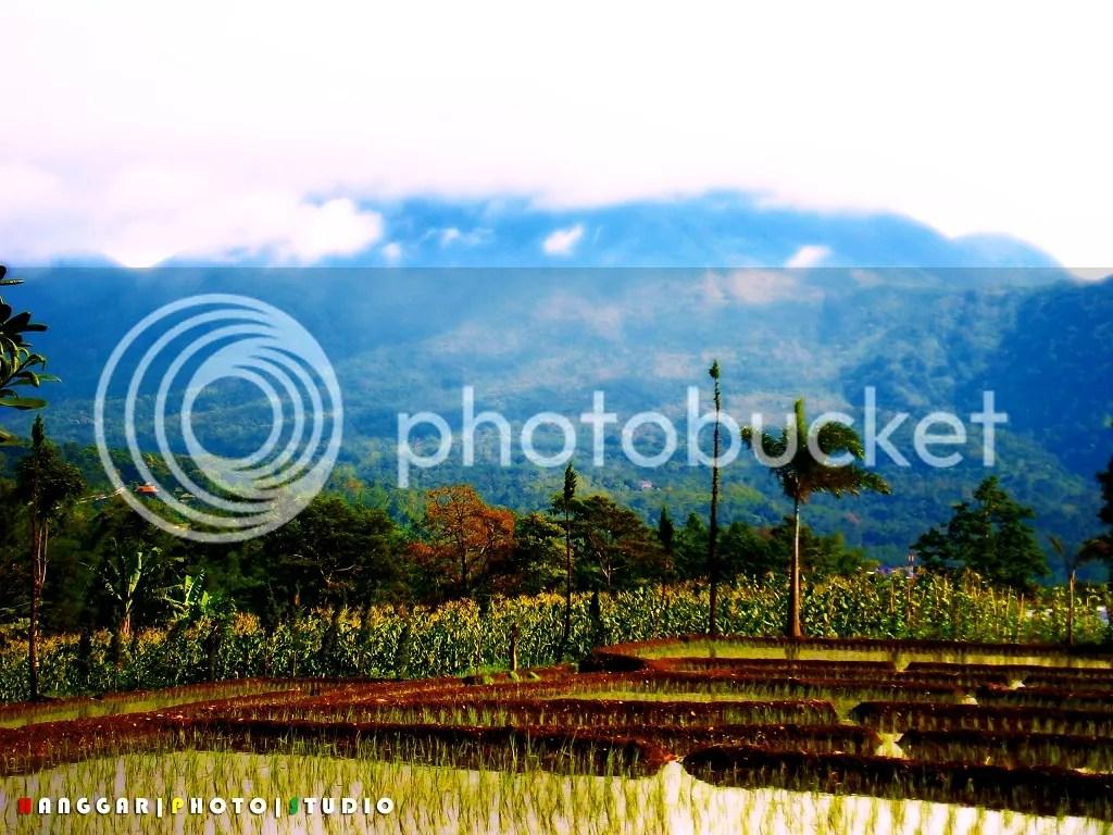 Sawah dan Gunung di Pacet