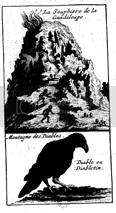 A drawing of the Soufriere of guadeloupe and of a Diable bird