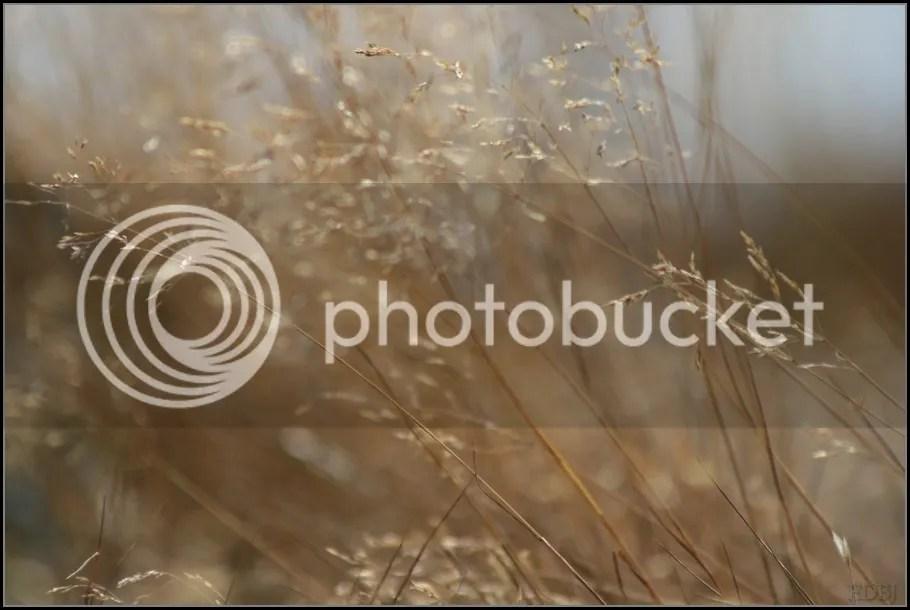 photo IMG_7594_zps7c3bca2e.jpg