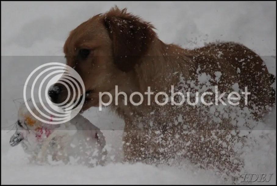 photo Vinterbilderjan14013_zps499aafcc.jpg