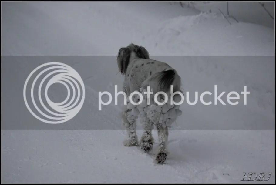 photo Vinterbilderjan14146_zps5df5f438.jpg