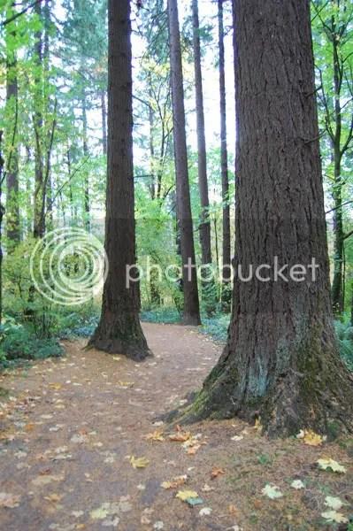 Trees on Wildwood Trail