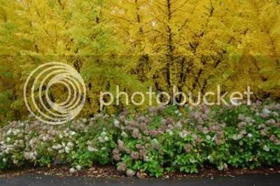 Washington Park Rose Garden