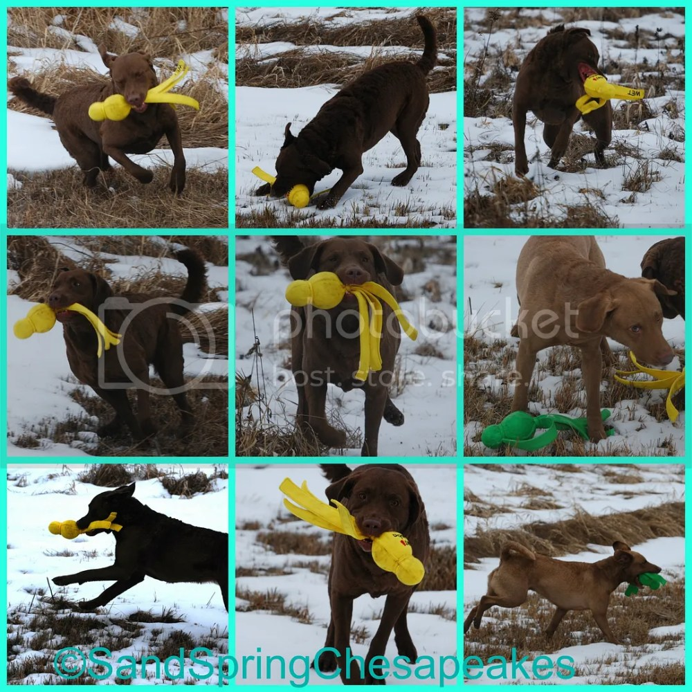 FitDog Friday~Wet Wubba's In The Snow & A Hay Bale (3/6)