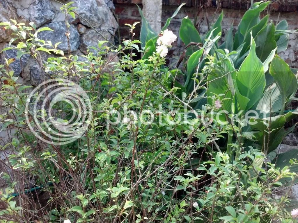 photo 2014-10-08_09-27-15_349_zps206d552b.jpg