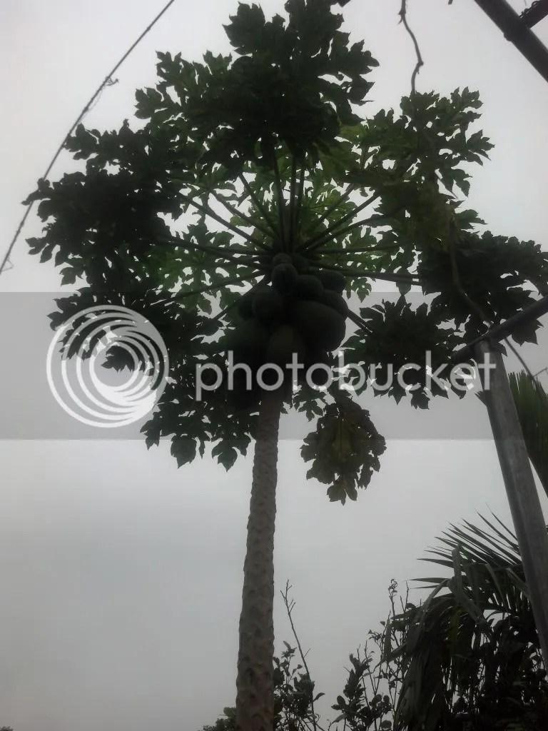 photo 2014-11-11_10-08-40_860_zps2a7d2f80.jpg