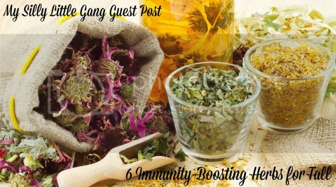 guest-post-6-immunity-boosting-herbs-for-fall