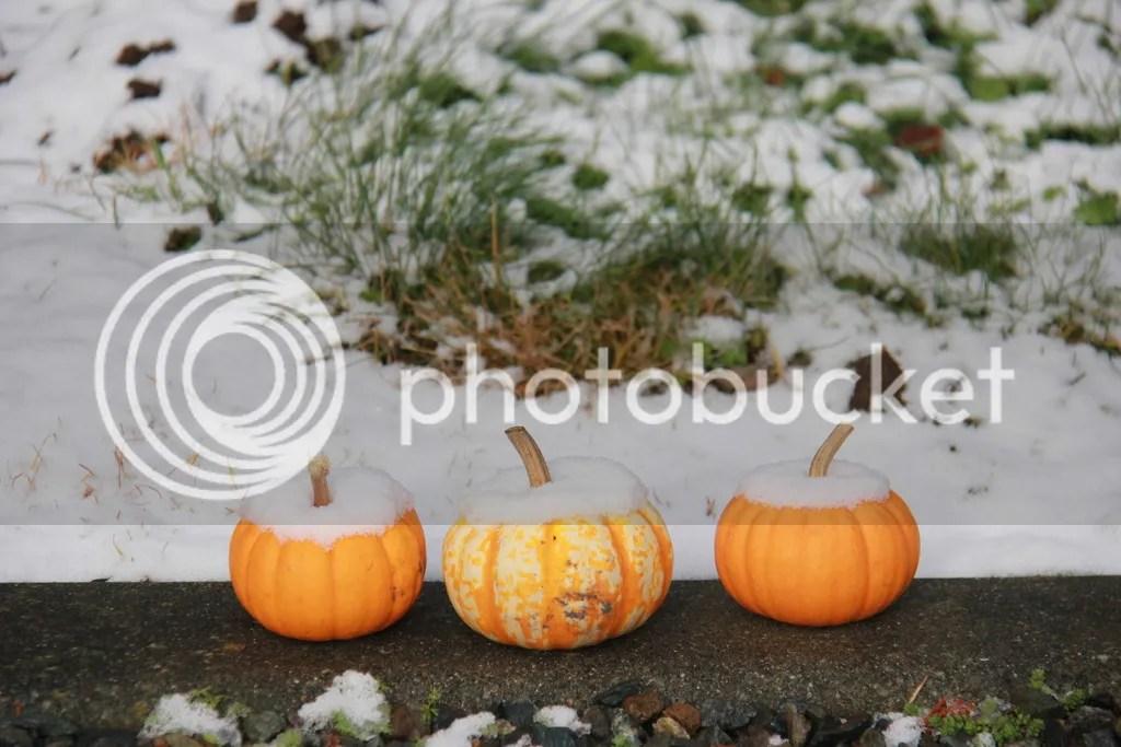 photo 14 December - snow 21_zps53qgfydm.jpg