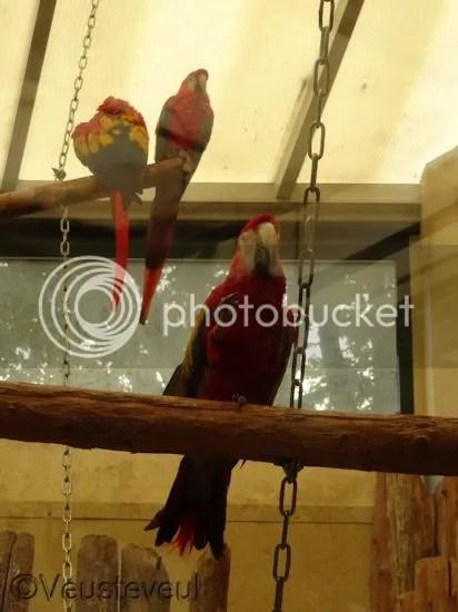 De papegaaien in het binnenverblijf
