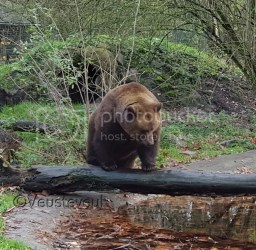 Persoonlijk - bijna vakantie .... beren op de weg!