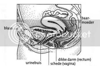 Beschadiging aan urinebuis en blaas