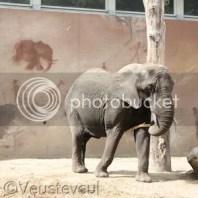 Mama Challege 2016 - Buitenactiviteit Ouwehands Dierenpark