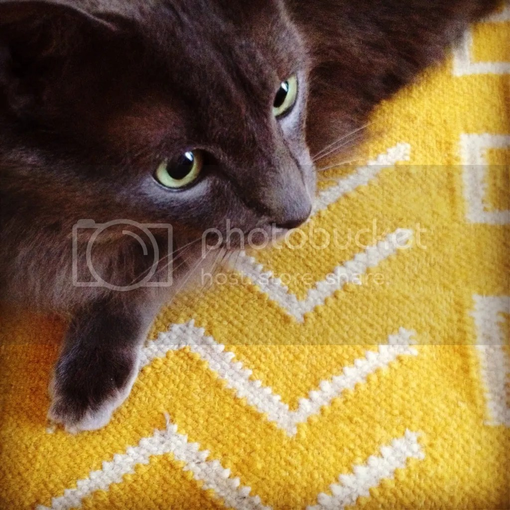 Jin on the Kitchen Rug