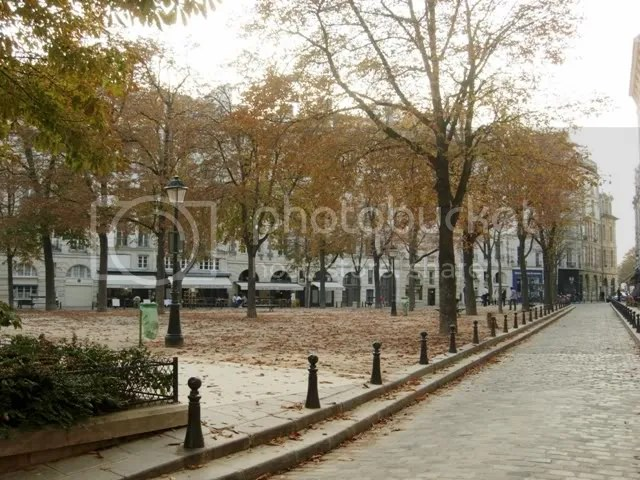 A great majority of the leaves have already changed here in Paris.