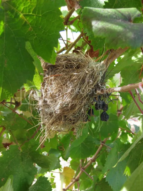 I found a birds nest!