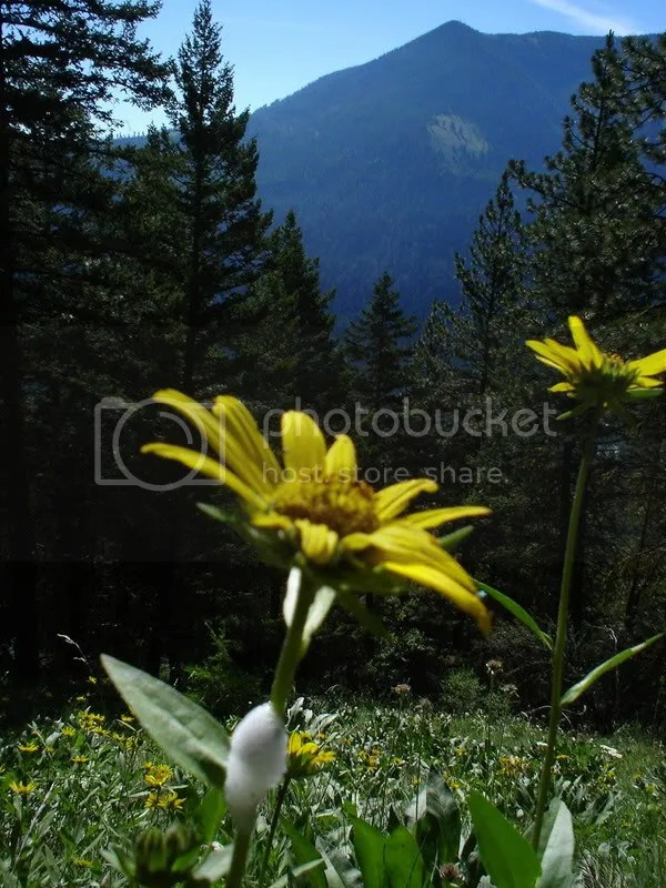 yellow flower foreground