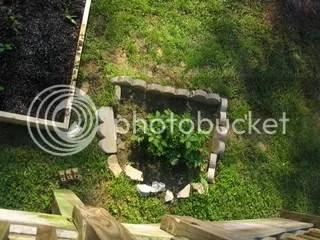 Potato Garden