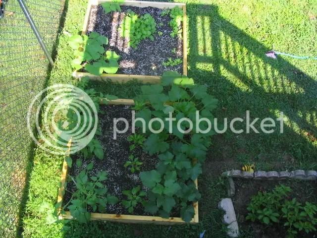 Garden at 1 month