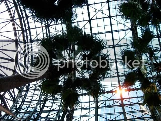 Palm trees at the World Financial Center Winter Garden