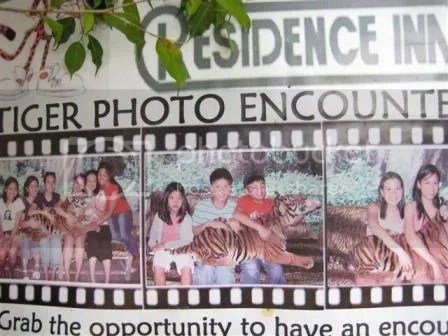 Anyone can have his photo taken while feeding the tiger.