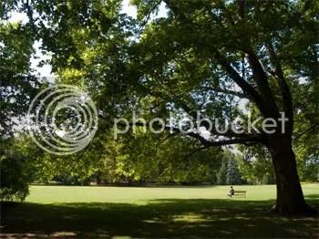 Image result for ombra di un albero
