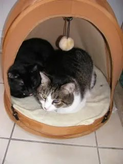 Ralph and Louie say the tent comfortably fits two