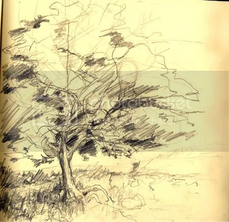 pencil sketch of tree in spring