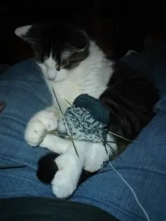 Oscar loves knitting