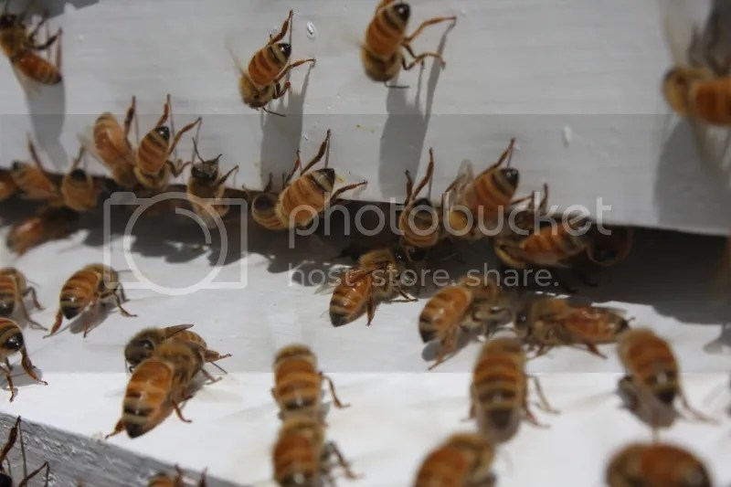Bees on a hot day