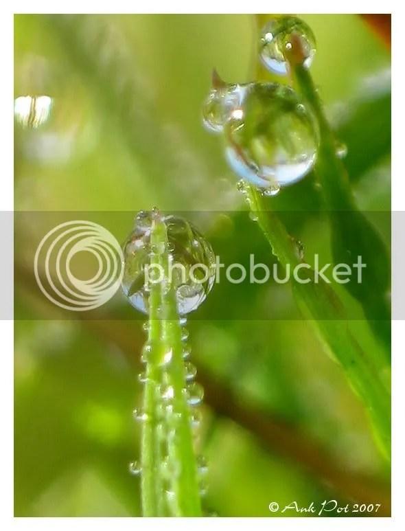 Grasdruppels