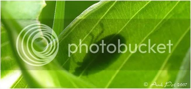 Log6-8-07-2.jpg