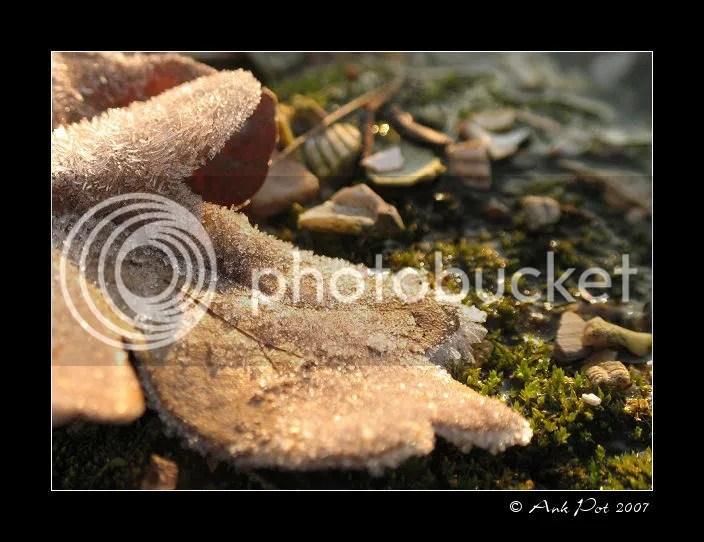 Log19-12-07-1.jpg