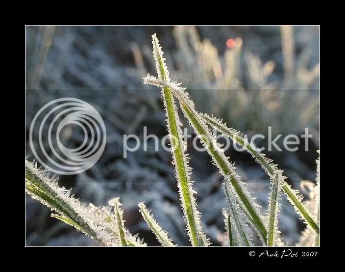 Log20-12-07-2.jpg