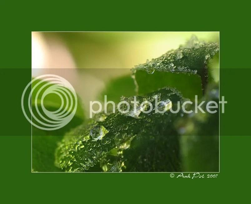 Log24-10-07-1.jpg