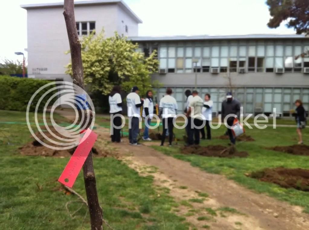 Apple trees and volunteers