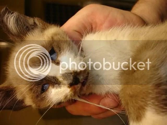 Estado en el que quedó el animal tras ser pateado. Fué declarado muerto en la clinica veterinaria.
