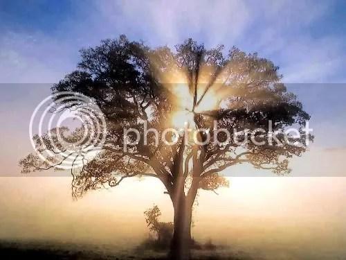 Tree02.jpg picture by pemerytx