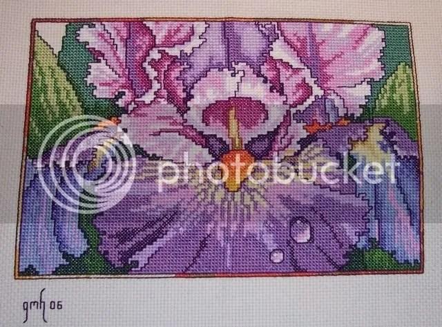 BB Iris