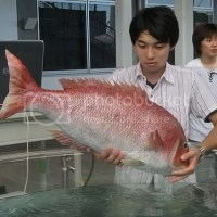 Japońska robo ryba na pomoc oceanom!