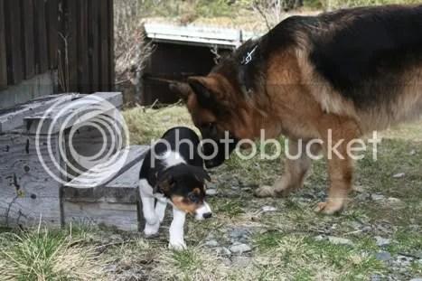 Vilja og Shima