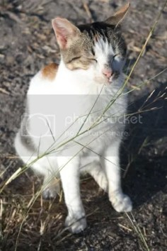 photo no-paparazzi-cat-2.jpg