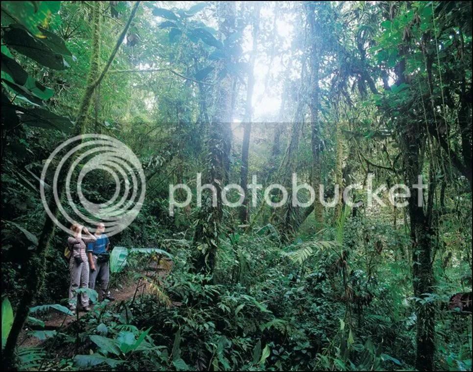 Selva del Darién