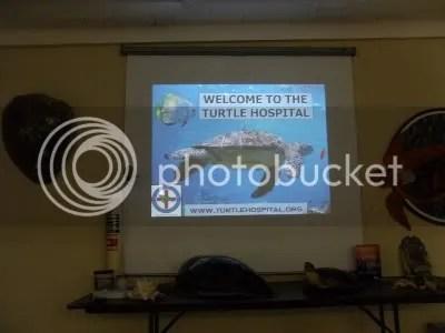 Turtle Hospital (2/6)