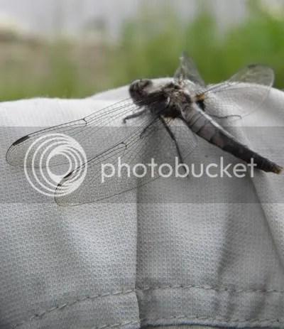 Dragonfly at Frontenac Park