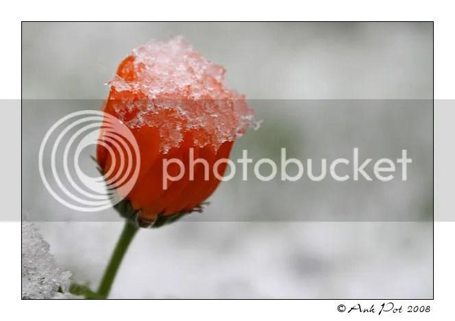 Log1-12-08-4.jpg picture by Knatop