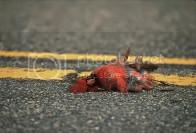 Hes not the first Cardinal caught napping on the road, right Tony?